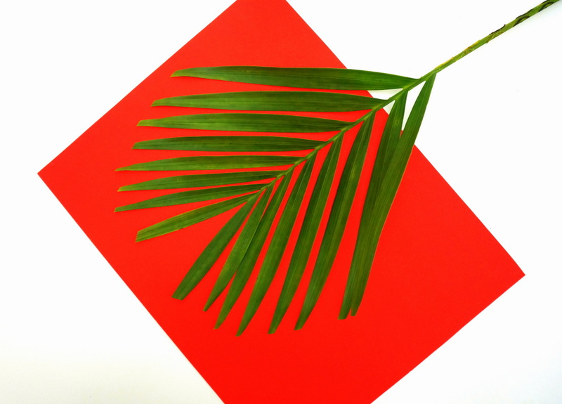A palm leaf to fill the vase