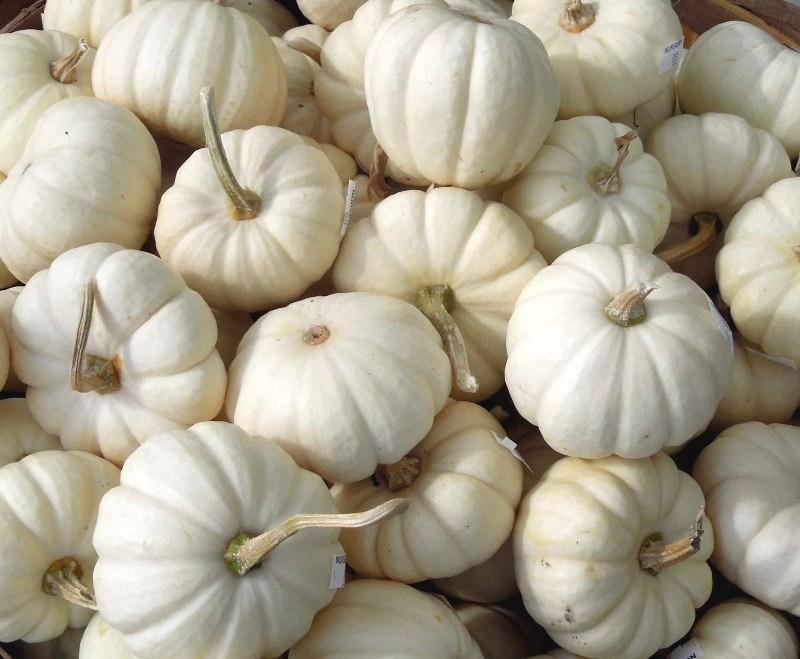 Small white pumpkin party favors