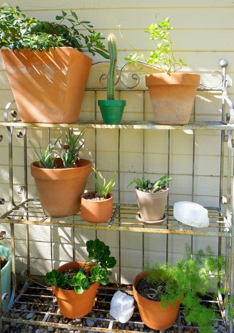 A shelf filled with potted plants