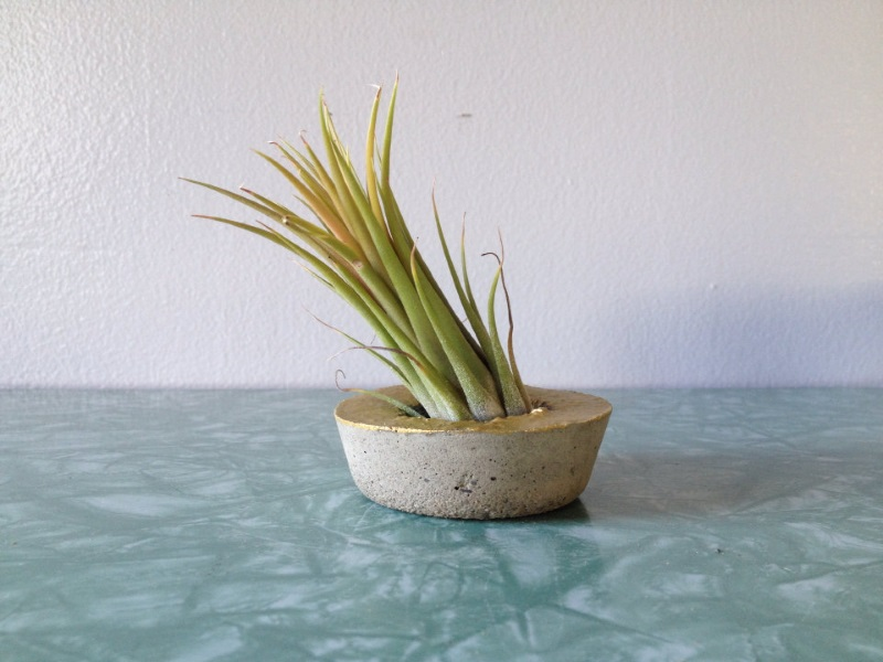 Concrete air plant container from ReRunRoom