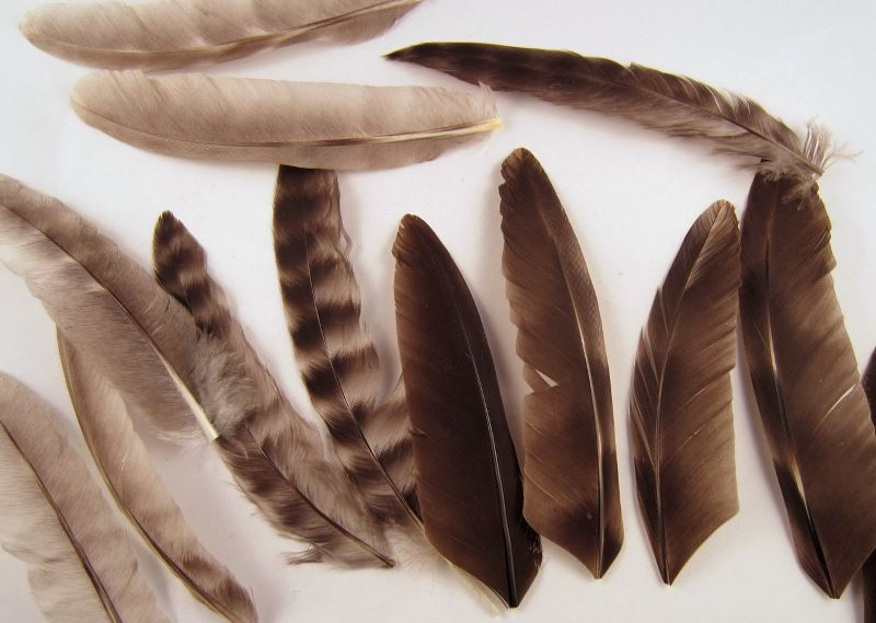 Cruelty-free grizzly wing feathers from Etsy shop Mountain Feathers