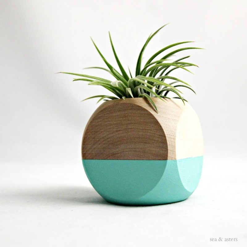 Geometric air plant cube from Sea and Asters