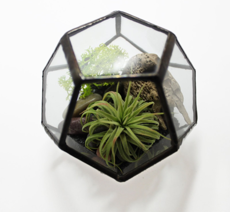 Geometric terrarium kit from Glimpse Glass