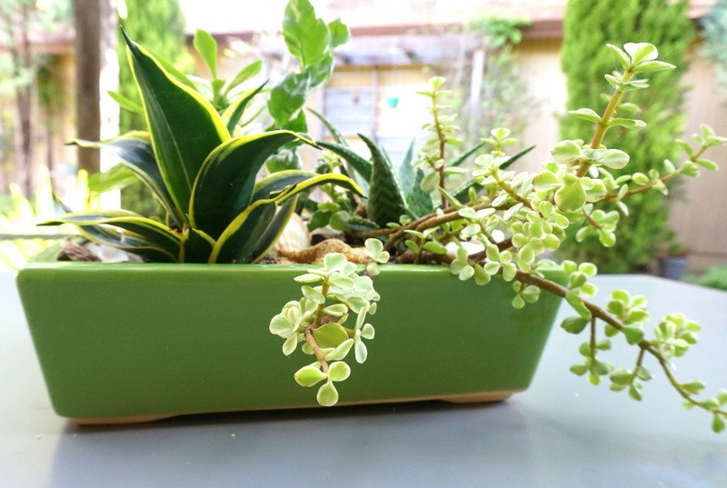 Green planter filled with succulents