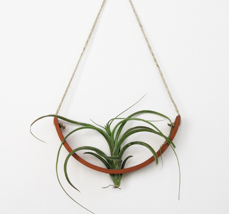 Hanging air plant cradle from Mudpuppy