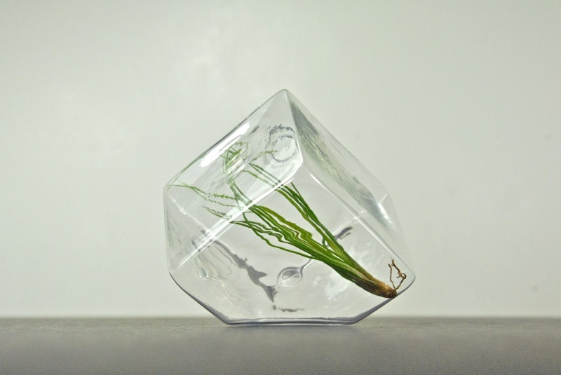 Mini geometric air plant terrarium from eGarden Studio