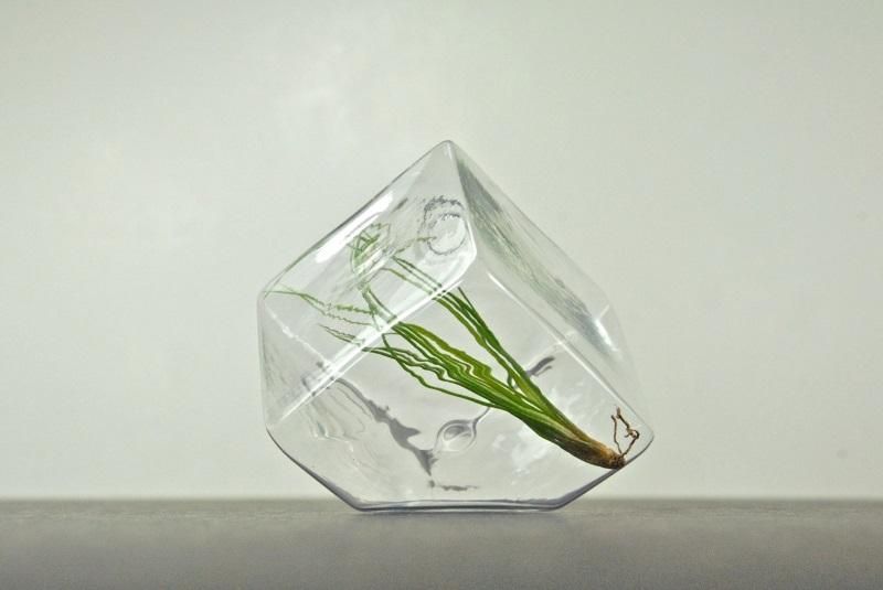 Mini geometric air plant terrarium from eGarden Studio