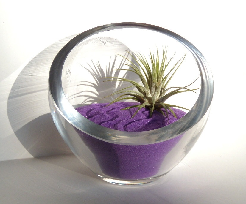 Modern air plant terrarium from Optical Conclusions
