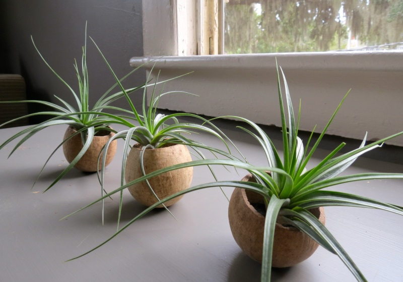 Set of natural seed pod containers from Air Plant Design Center