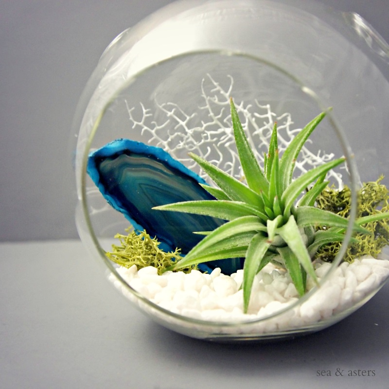 view in gallery spherical air plant terrarium with agate from sea u0026 asters