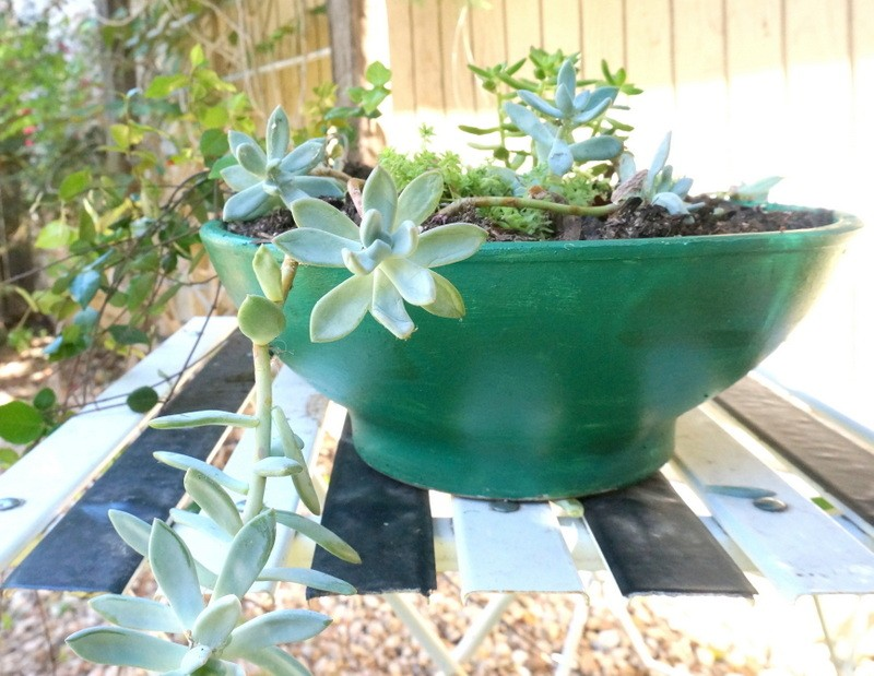 Succulents in an emerald green planter