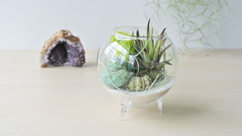 Air plant terrarium from The Zen Succulent