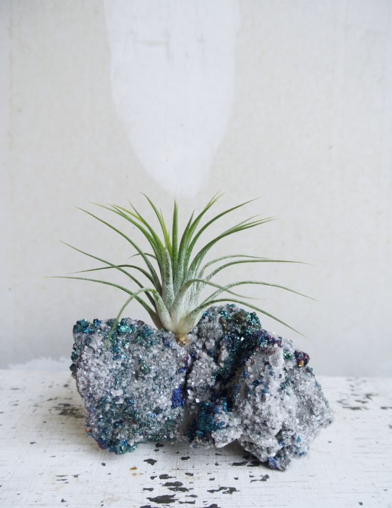 Chalcopyrite air plant garden from ThEeRabbitHole