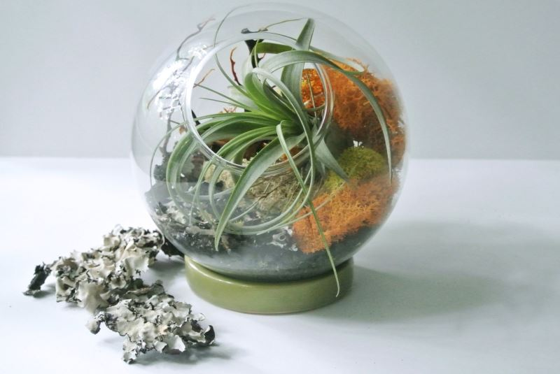 Globular tabletop terrarium