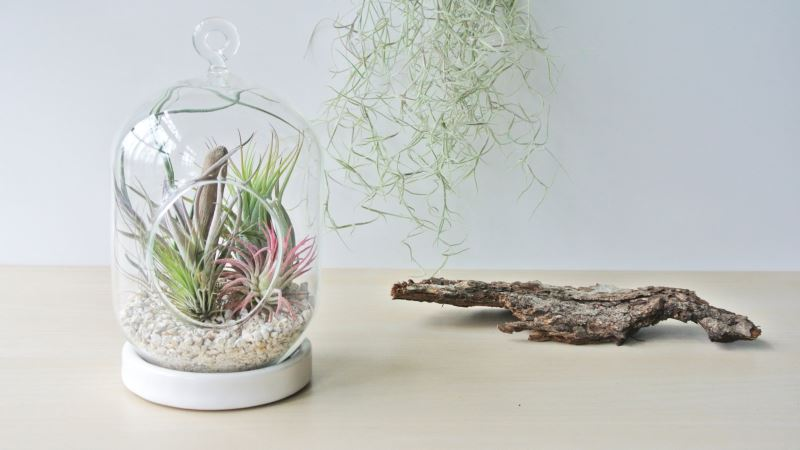 Hanging air plant terrarium from The Zen Succulent