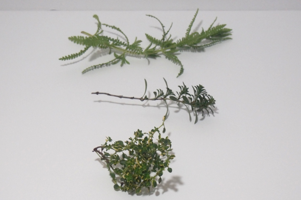 Herbs used for making a wreath