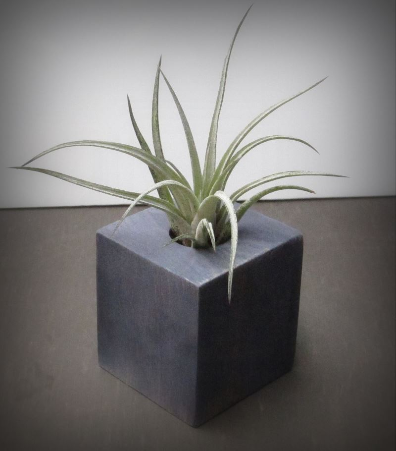 Rustic distressed air plant holder from Spirit and Vine