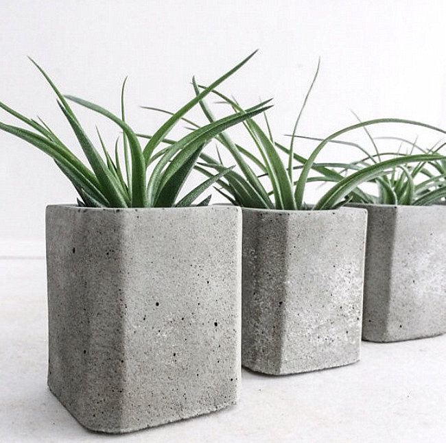 Square concrete air plant planters