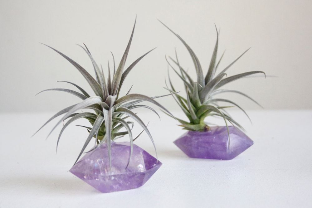 Tillandsia amethyst garden from Falcon and Finch