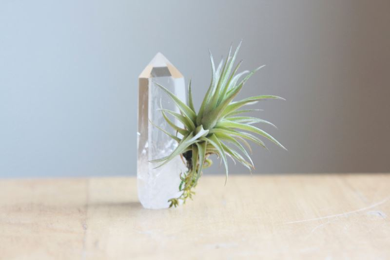 Tillandsia and crystal from Etsy shop Falcon and Finch