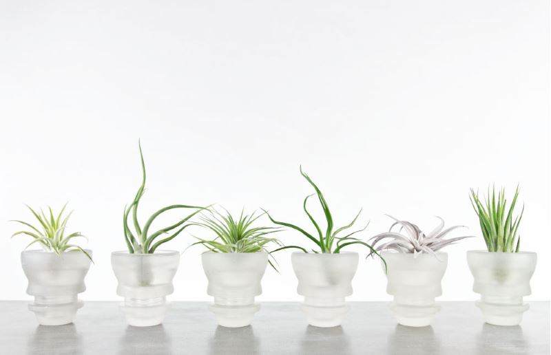 Tillandsia planters from Etsy shop Faddis Design