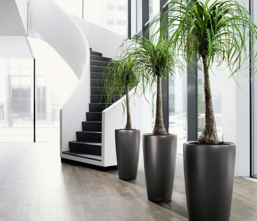 Tall tropical potted plants