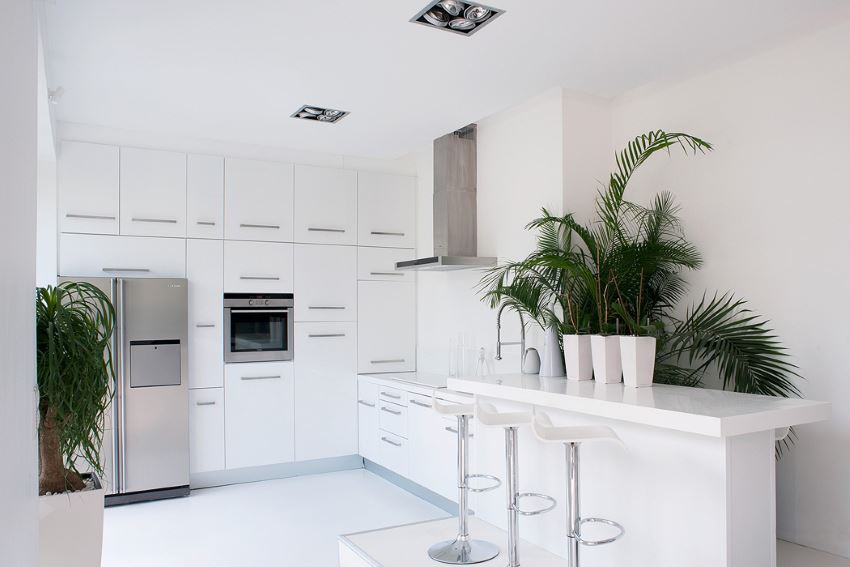 White kitchen with tropical plants