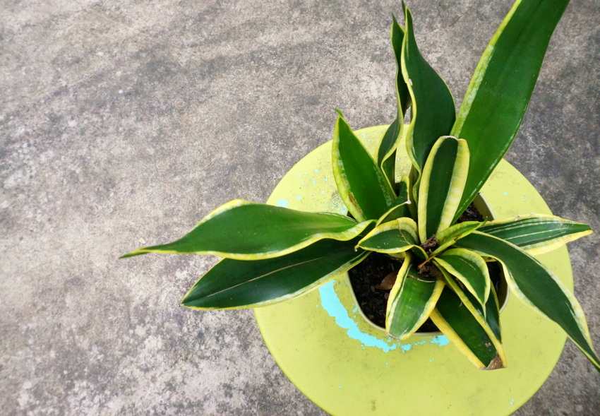 A snake plant takes center stage Easy Yard Makeover Ideas for a Fresh Start
