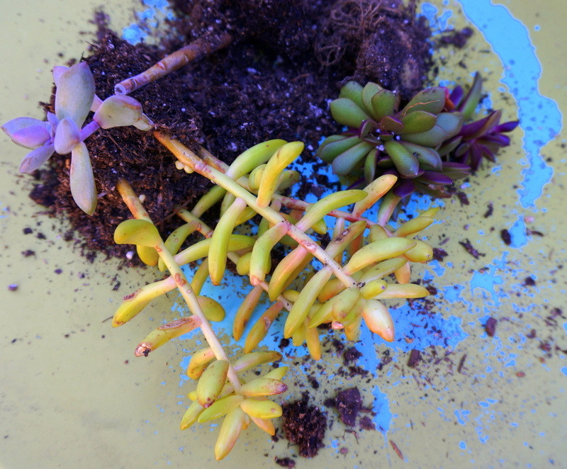 Assorted succulents on a colorful table