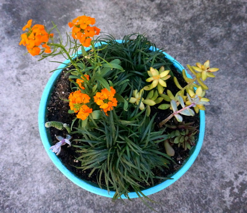 Colorful succulent planter A DIY Modern Planter Project for Spring