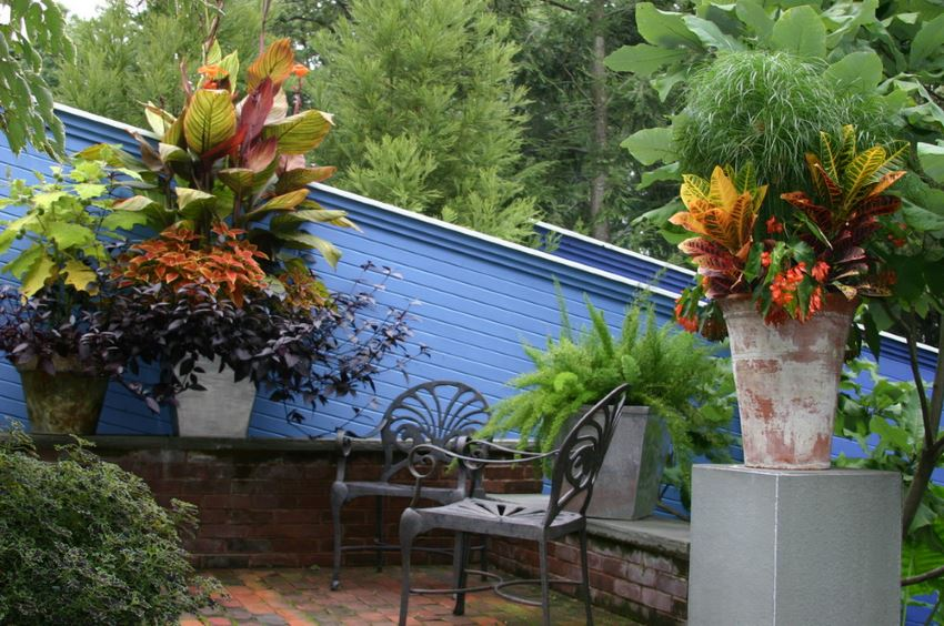 Containers of tropical potted plants