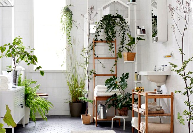 An eclectic bathroom plant menagerie that features ivy plentifully