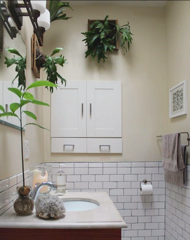 Elkhorn Fern paired with subway tile