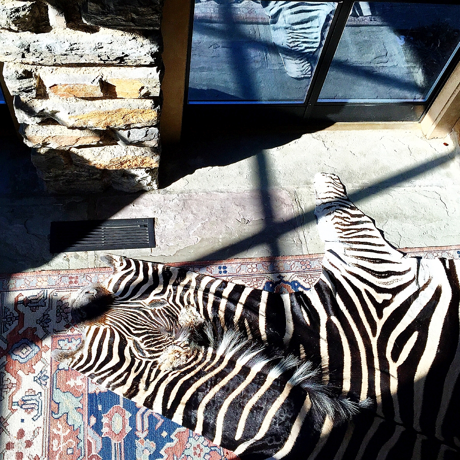Stunning Cowhide, Zebra Rugs & Pillows from Forsyth