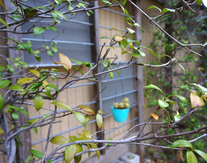 I spy a planter through the trees
