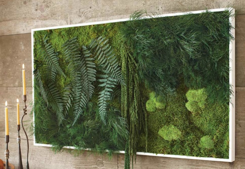 A living wall composed of mosses and ferns