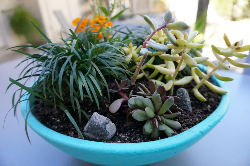 Pebbles in an outdoor succulent arrangement