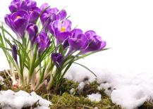 Spring-Flowers-537x402