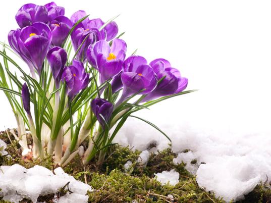 Spring-Flowers-537×402