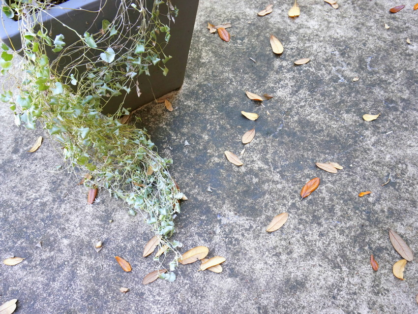 A messy patio filled with leaves