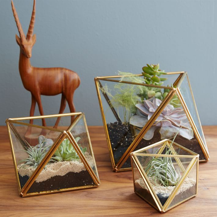 Faceted terrariums from West Elm