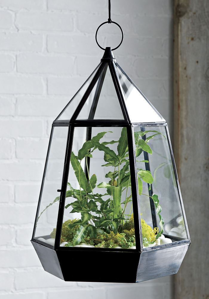Glass terrarium from CB2