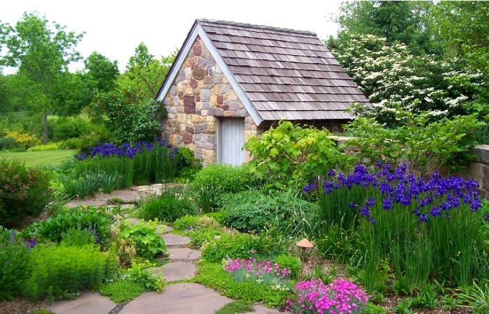 Japanese Iris like wetter environments