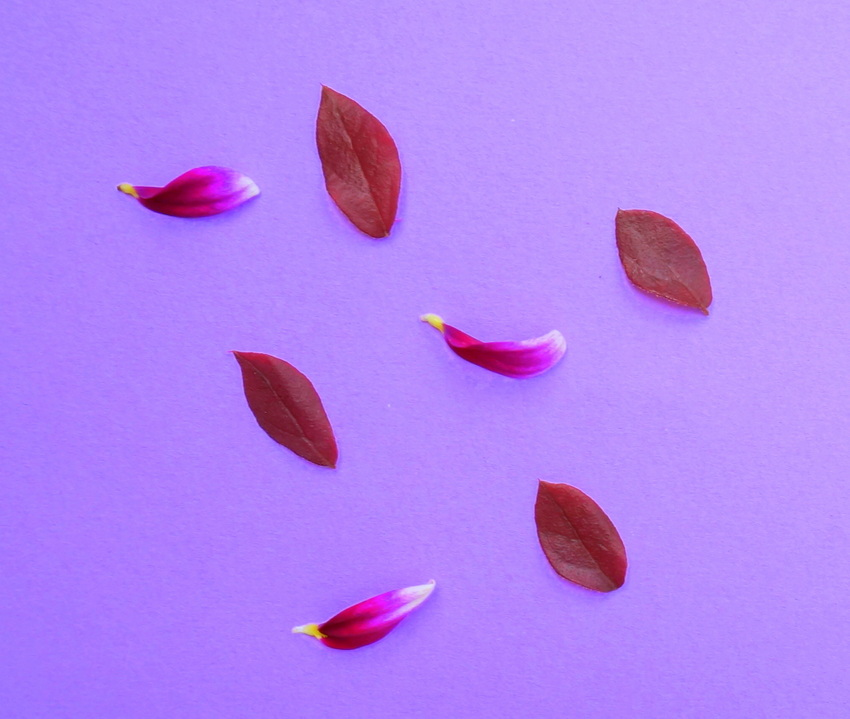 Petals and leaves