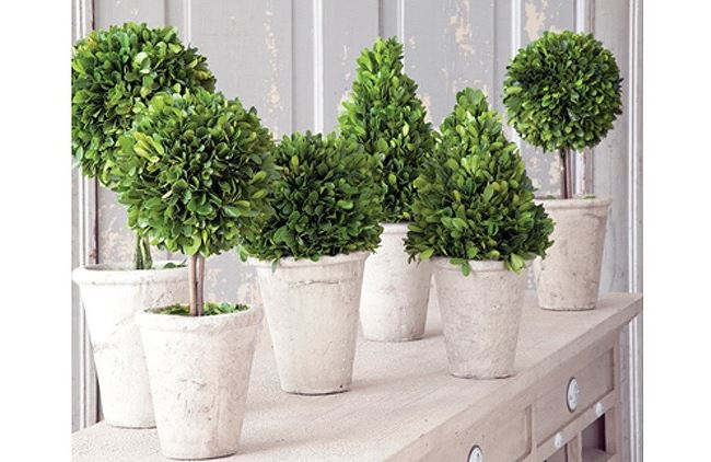 Preserved boxwood topiaries from Antique Farm House