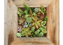 Reclaimed Wood Succulent Planter