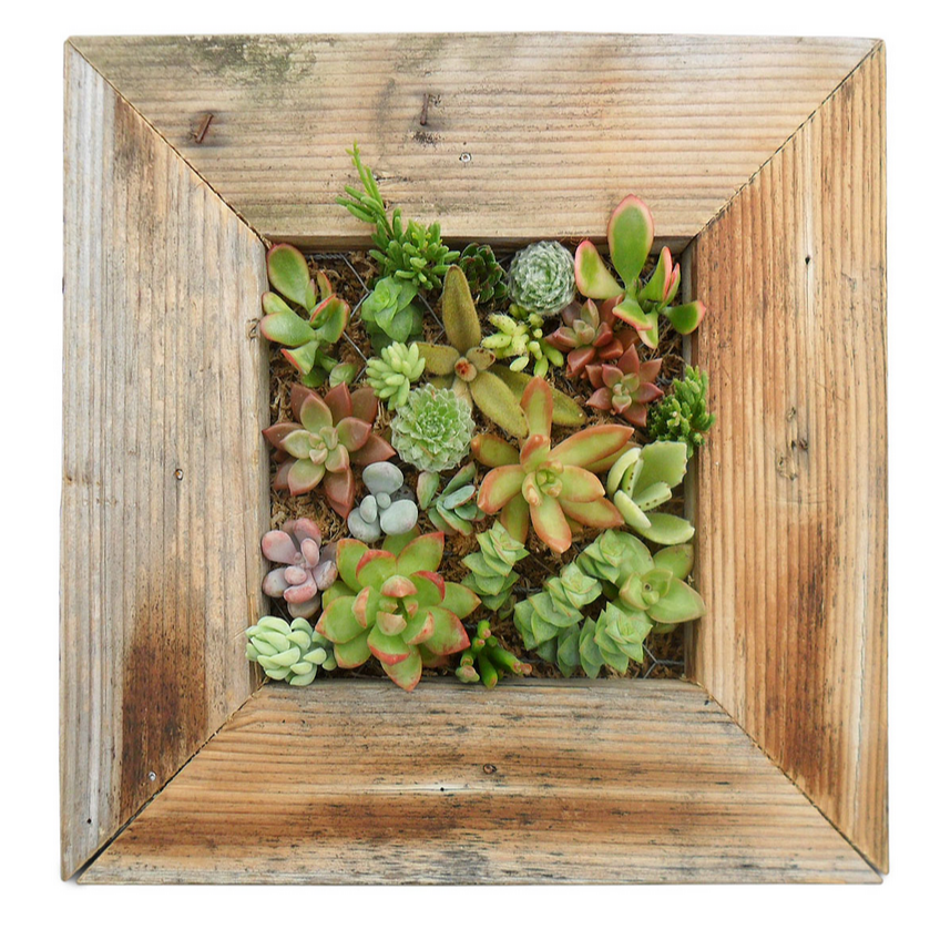 Reclaimed Wood Succulent Planter