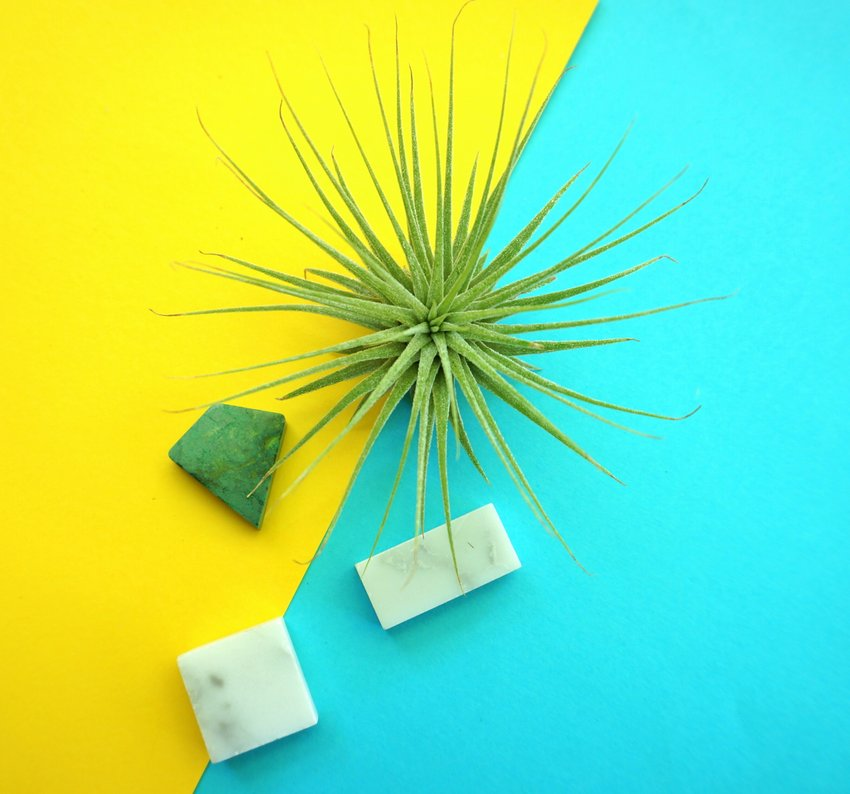Air plant and marble tiles