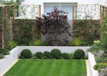 Assortment-of-lush-plants-in-a-modern-manicured-yard-217x155