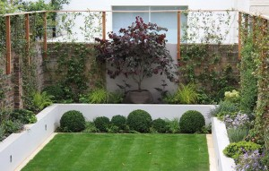 Assortment of lush plants in a modern manicured yard